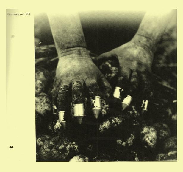 aardappelkrabbers of pijpenkoppen